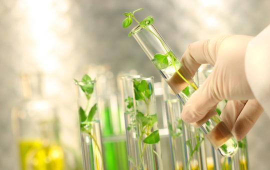 ESCOM Chimie Valorisation des Agro-ressources- école de chimie ESCOM