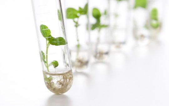 industrie du végétal- éprouvettes